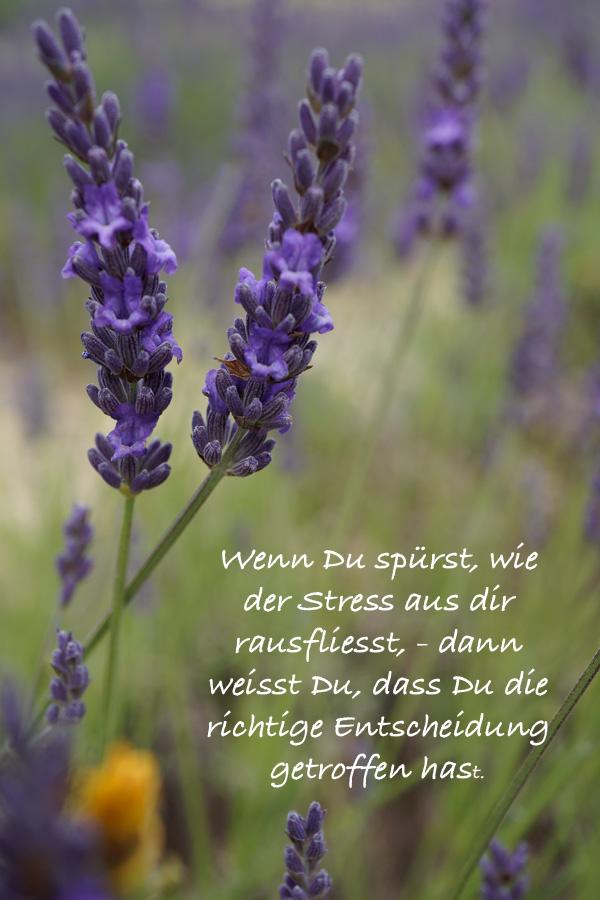 Lavendel_Entscheidungen